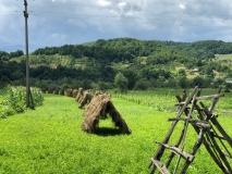 Nostalgische Landwirtschaft statt Agrarindustrie